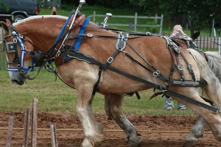 horse-pull
