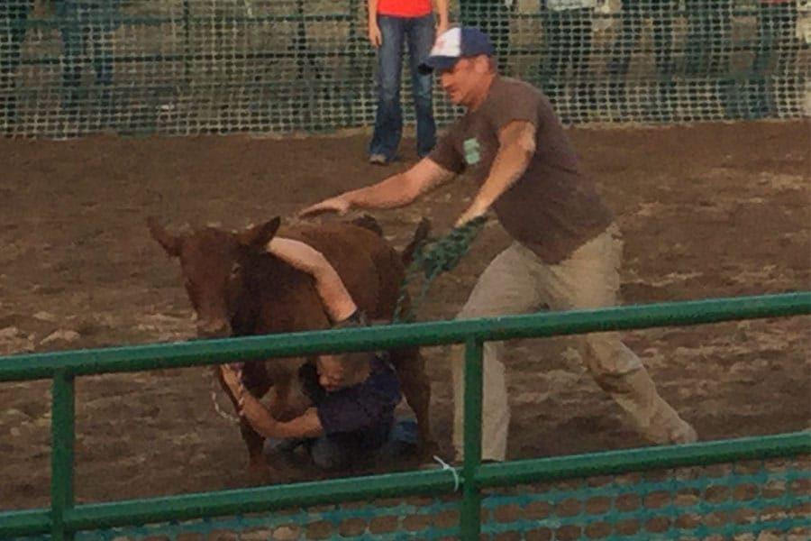 livestock-scramble